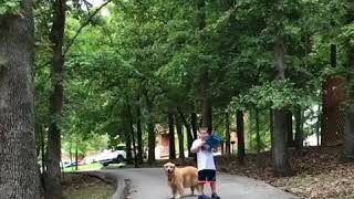 Autism Service Dog Redirects Boy Away From Street