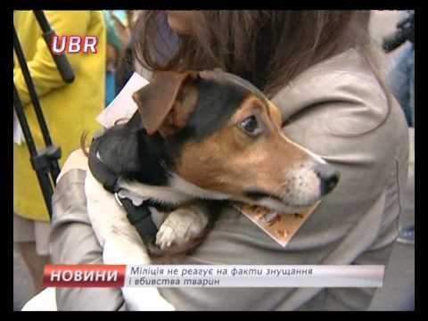 С собаками к Авакову! Митинг против догхантеров