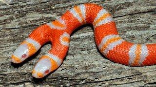 Most SHOCKING Animal Mutations Around The World! | Kholo.pk