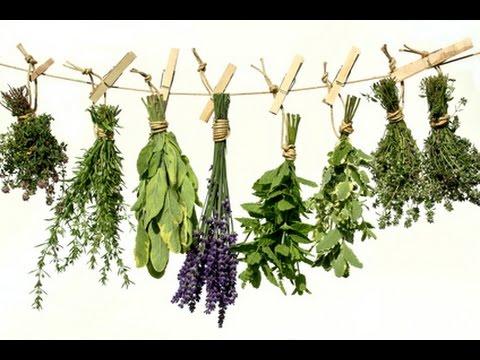 Hemoroidy i popularne sposoby leczenia