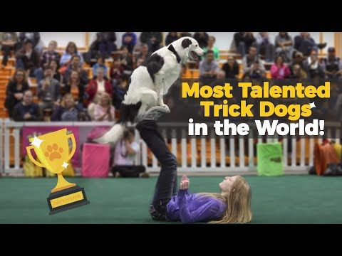 Dogs' Amazing Talents