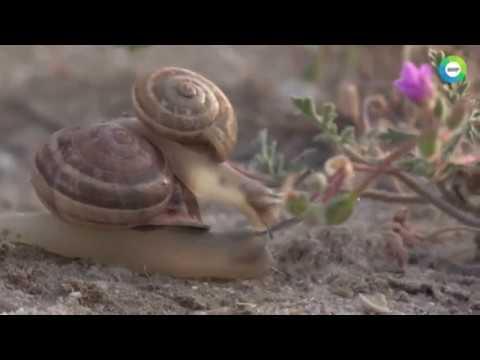 День животных и растений. Документальный фильм