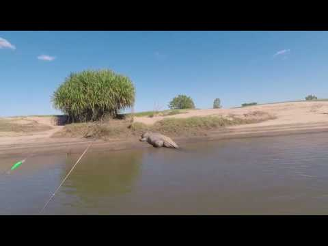 Krokodil erschreckt Fischer