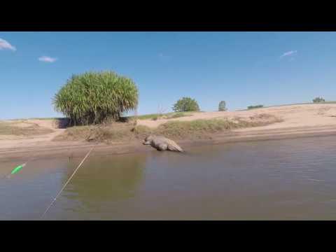 Рыбаки дразнили крокодила и едва не поплатились за это