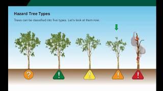 Tree Hazard Awareness Training