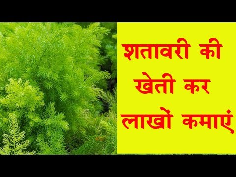 Start Shatavar (Asparagus) Farming and Earn Good Profit. || Shatavari Farming