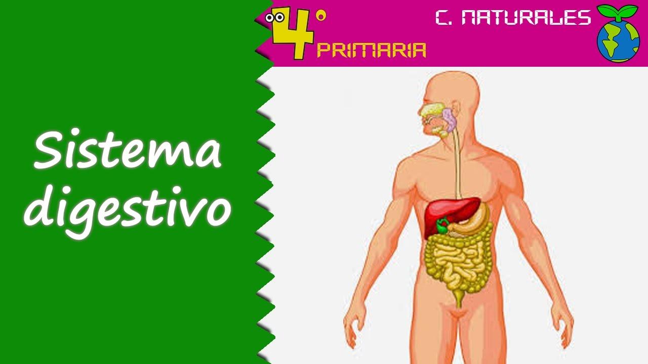 Ciencias de la Naturaleza. 4º Primaria. Tema 2. Función de nutrición. Sistema digestivo