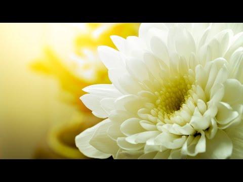 Morning Relaxing Music - Healing Music for Stress