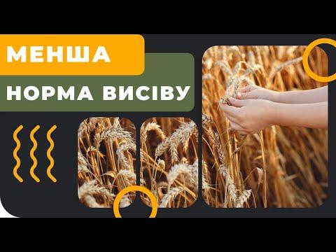 Чи треба зменшувати норму висіву зернових?