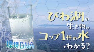 【びわ湖を守る仲間たち】環境DNA コップ1杯の水でわかる、びわ湖の生き物たち第1回
