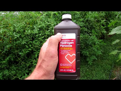 , title : 'Complete Guide to Using Hydrogen Peroxide on Tomato Plants: Recipes, Maintenance, Outbreaks & More