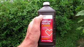 Complete Guide To Using Hydrogen Peroxide On Tomato Plants: Recipes, Maintenance, Outbreaks & More