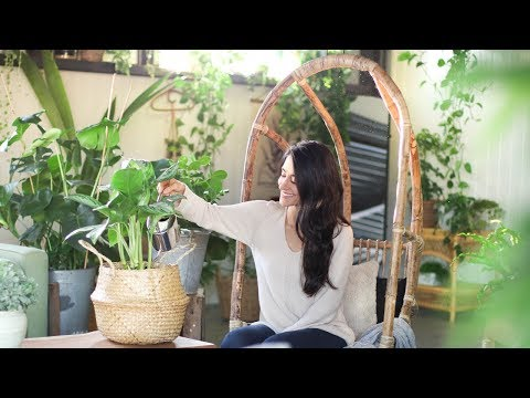 Houseplant Care Basics to Help You Grow Healthy Plants