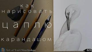 Рисуем Птицу,Цаплю.