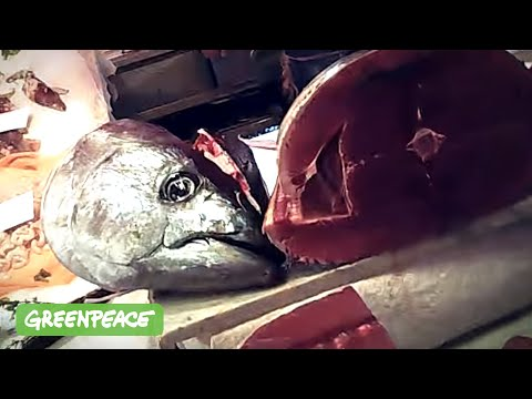 La pesca nella regione di Vladimir la soluzione un falco