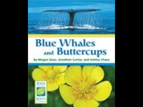 , title : 'Blue Whales and Buttercups