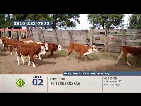 Lote Terneros/as Villa Ocampo