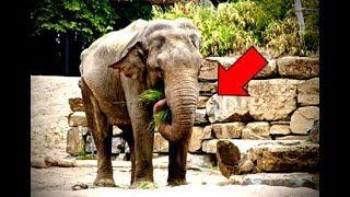 Слониха три недели стояла на одном и том же месте и неспроста