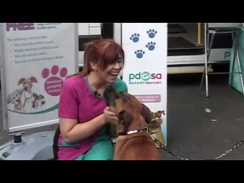 Find out more about PDSA PetCheck!