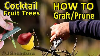 Grafting Fruit Trees | COCKTAIL FRUIT TREES - How To Graft And Prune Them