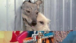 Мужское / Женское - Концлагерь для собак. Выпуск от 19.09.2018