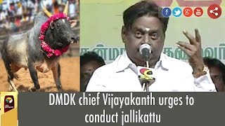 DMDK Chief Vijayakanth Urges To Conduct Jallikattu
