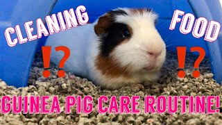 HOW TO CLEAN A GUINEA PIG CAGE | Guinea Pig Care Routine