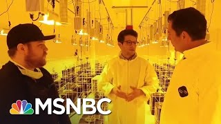 The 2016 Election And The Marijuana Vote | MSNBC thumbnail