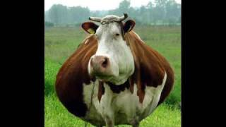 i am cow song