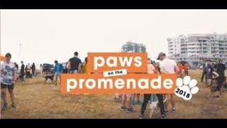 Paws on the Promenade - the video