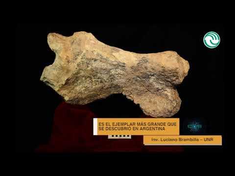 Video: Descubren un perezoso gigante de 700 mil años en Buenos Aires