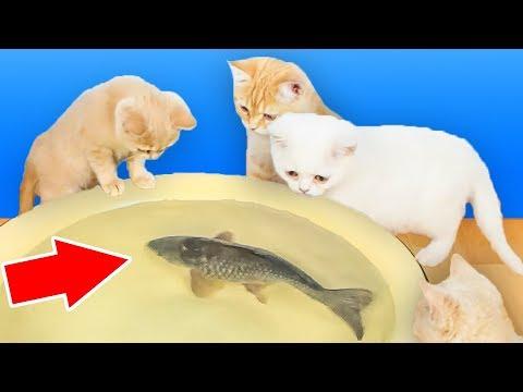 Welche Parasiten im Lachs ist