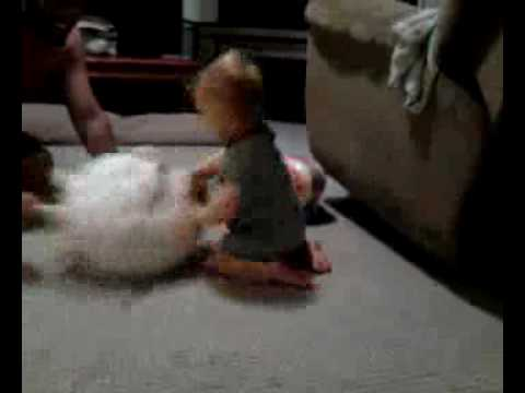 Baby humping the dog