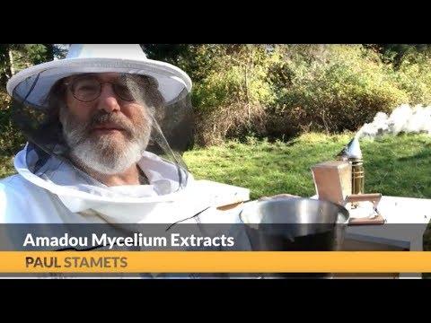 Ointment pimafutsin fungus paa