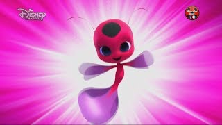 MIRACULOUS trasformazione Ladybug Chat Noir Rene Rouge Queen Bee Carapace Papillon Aqua ice