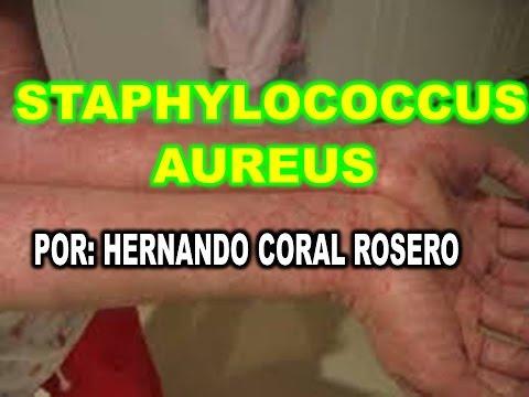 staphylococcus aureus prostata