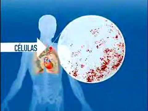 La hipertensión esencial es la gravedad leve o moderada