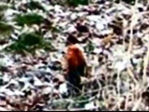 Il Folletto fotografato nei boschi della Valsassina