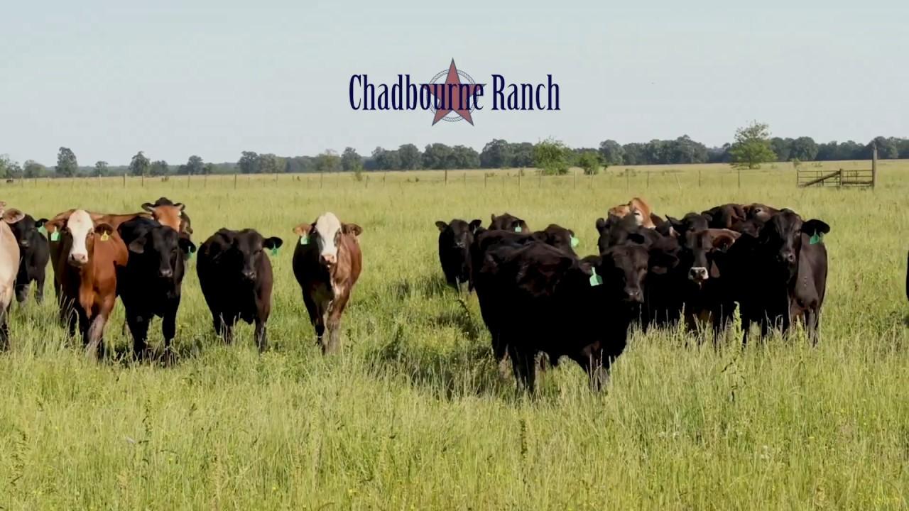 Chadbourne Ranch