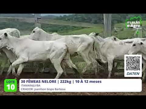 30 FÊMEAS NELORE - ITAMARAJU-BA