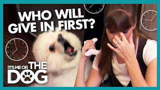 Battle of Patience Against the Loudest Pomeranian | It's Me or the Dog