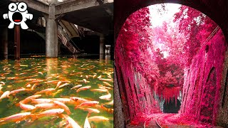 Proof Nature Takes Over Abandoned Places In Amazing Ways