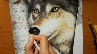 Speed Drawing of a Wolf in the Forest   Jasmina Susak