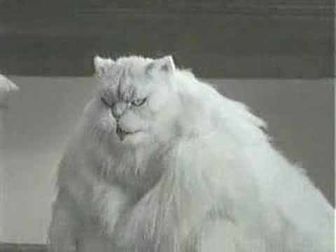 Pomysł Japończyków na odchudzenie kota