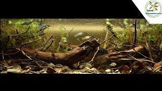 375l - Akwarium biotopowe. Rzeka Subin, Guatemala, Ameryka Ś