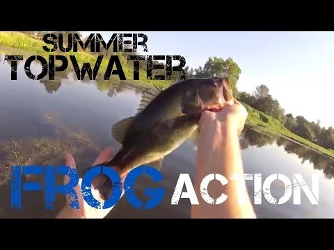 Bass Fishing- Largemouth on Hollow Body Frog