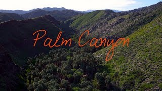 Wander List ~ Palm Canyon