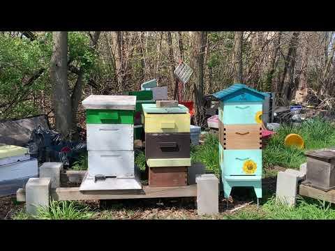 Bees, the Hidden Farm Helper