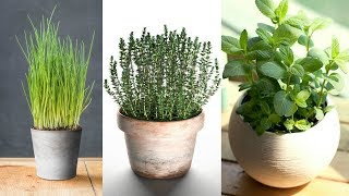 5 No Fail Indoor Herbs And How To Grow Them