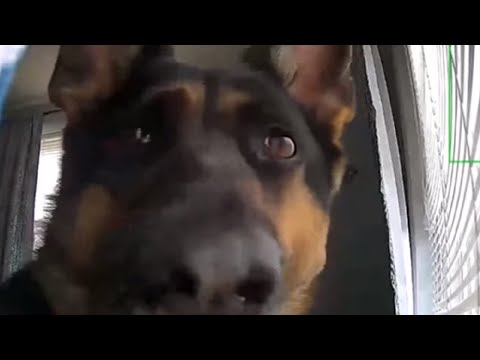Security footage picks up hilarious footage of guard dog